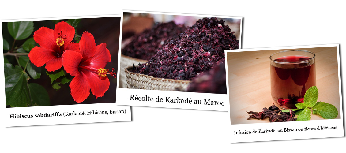 infusion d'hibiscus rouge